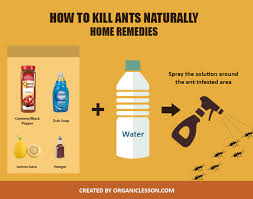 use these simple home remes to kill ants naturally at home or outdoors