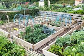 about raised garden beds treated wood