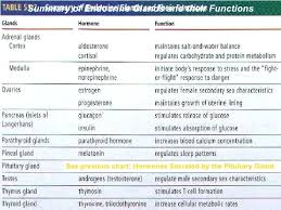 Gallery Endocrine Gland Chart Human Anatomy Library