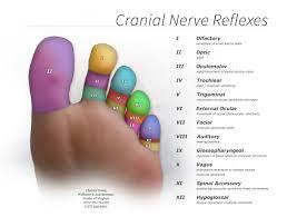 Cranial Reflexology Chart Reflexology A Golden Ticket To The Land Of Well Being