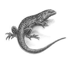 мужские эскизы тату ящерицы