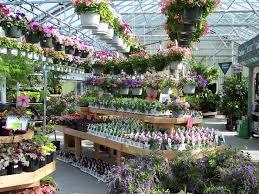 Annual greenhouse at W & W Nursery Apalachin,NY