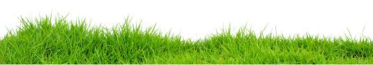 grass png. Unique Grass Grass PNG Images On Png R
