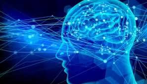 「脳画像」の画像検索結果