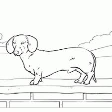 Dachshund Coloring Pages Online Coloring Pages Of Your Favorite Dog