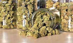 Image result for legal Marijuana