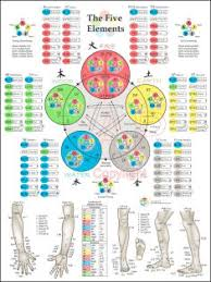 Chiropractic Wall Charts Osteopathic Chiropractic Posters Charts And Products