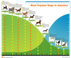 Most Popular Pets Top10 Most Popular Dogs In America The Pets Central