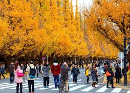 Autumn in Tokyo 2021: 16 Best Places for Fall Foliage in Tokyo ...