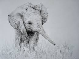 Baby Elephant Drawings Pick A Pencile And Draw What You Want Drawing