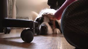 bored dog gif. calm petting bored dog gif