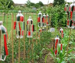 how to keep birds away from garden. How To Keep Birds Out Of The Garden Away Pop Bottles Uk From O