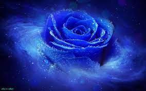 Blue Wallpaper Galaxy Rose