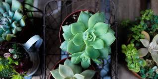 Il filodendro è un genere di 275 specie di piante sempreverdi che appartiene alla famiglia delle aracee, originario dall'america meridionale, viene coltivato spesso come pianta da. 5 Piante Grasse Da Appartamento Facili Da Curare