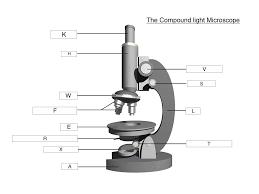Parts Of The Microscope The Microscope Lesson 0362 Tqa Explorer