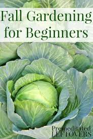 fall vegetable gardening for beginners tips for creating a cool weather garden