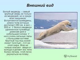 Презентация на тему Белый медведь Вид занесён в Международную   Красную книгу России 3 Внешний