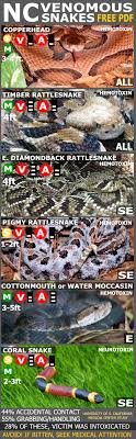Venomous Snakes Of North Carolina Out Of 37 Species Only 6