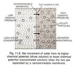 essay on osmosis definition types and importance net movement of water