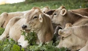 Importanta furajelor in cresterea animalelor din ferme (P) | Antena 3