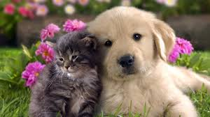 full hd images of animals. Brilliant Full Cat And Dog Animals Cat Sewwt Full Hd Desktop For Full Hd Images Of Animals G