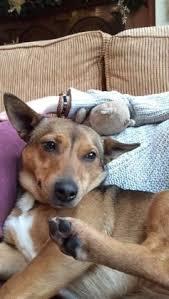 Pet Minder And Dog Walker Home Dog Boarding Doggy Day Care Dog