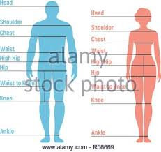 Man Size Chart Human Front Side Silhouette Isolated On