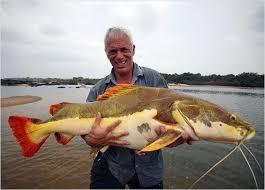 amazon river catfish. Simple Catfish Amazon River Catfish On M