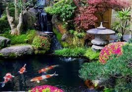 Japanese Koi Garden Home Design Ideas