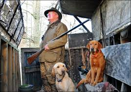 Is Your Dog Disobedient Or Deaf Shotgun Life