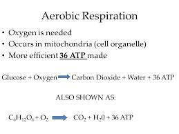 photos chemical equation for aerobic respiration human anatomy write a chemical equation for cellular respiration