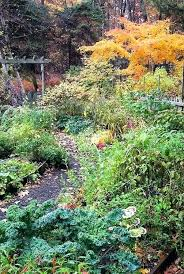 fall garden vegetables. fall garden in texas vegetables with ornamental kale vegetable annuals and . best plants