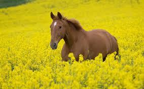 beautiful baby horses wallpaper. Unique Horses Top 23 Horse Wallpapers In HD Beautiful  On Baby Horses Wallpaper A