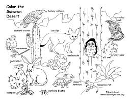 desert animal coloring pages