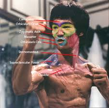 Bruce Lee Practice Chart Unit 1 Visual Recording Colossus Animations