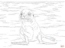Galapagos Sea Lion Pup Coloring Page Free Printable Coloring Pages