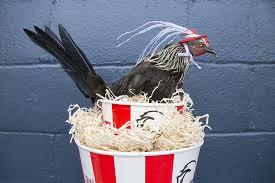 fried chicken bucket hat. Plain Fried Intended Fried Chicken Bucket Hat