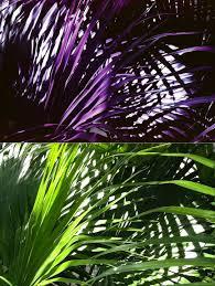 Purple Green Lomochrome Purple Xr How To Get That Purple Lomography