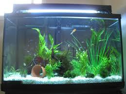 29 Gallon Tank Light 29 Gallon Community Betta Tank The Post Has A List Of Fish