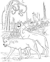 Realistic Wolf Coloring Pages Angry Wolf Coloring Pages Print