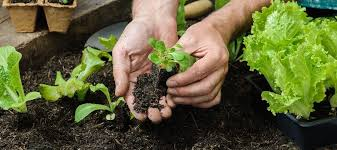 Small Picture How To Start A Vegetable Garden From Scratch Examina Soil R Inside