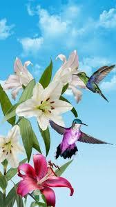 hummingbirds beautiful swan beautiful flowers beautiful things pretty birds beautiful wallpaper