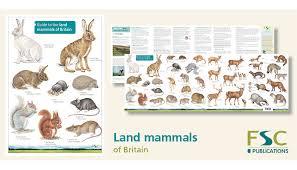 Fsc Fold Out Id Chart Land Mammals Identification Chart