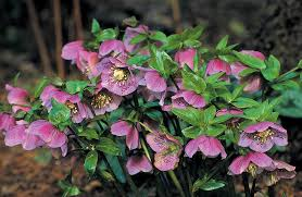 Best Shade Plants Flowering Shade Perennials Year After Year EasyClimbing Plants That Like Shade