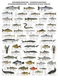 Seafood Yield Chart Pin By Todd Sloan On Fishing Freshwater Fish Fish Fish Chart
