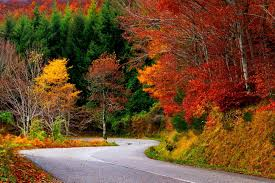 Image result for colorful fall images