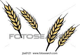 wheat drawing.  Drawing Clipart Of Bunch Wheat Jba Inside Wheat Drawing T