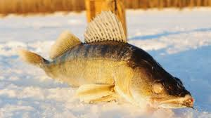 9 best ice fishing lures for walleye of