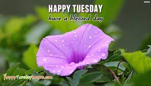 Image result for picture have a blessed tuesday