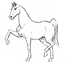 Small Picture Color pages for kids How to draw a Horse Step by step penciling